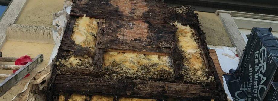 Severely Water Damaged Wood Behind EIFS